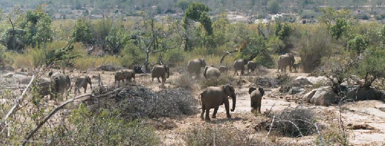 zuid afrika lesotho drakensberg krugerparkTemperatuur Krugerpark.htm #10